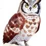 生物 鳥 フクロウ